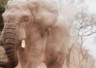 Hoe we gedrag kunnen veranderen? Als olifantenfluisteraar!